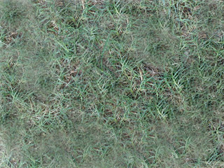 northeastern Florida bermuda grass in the fall